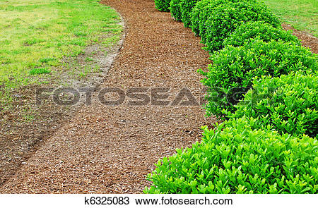 Stock Photo of A row of well maintained and manicured bushes in.