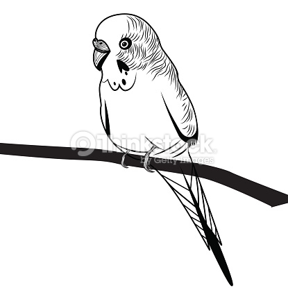 Parrot Budgie Bird Head Vector Illustration For Tshirt Vector Art.