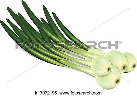 Clipart of Chives k17072195.