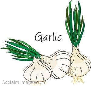 Clip Art of Garlic Heads.