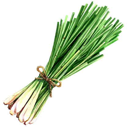 Lemongrass Clip Art, Vector Images & Illustrations.