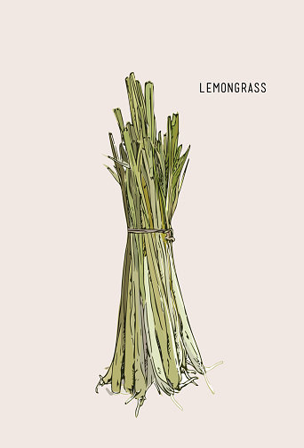 Lemongrass Vector Illustration Clip Art, Vector Images.