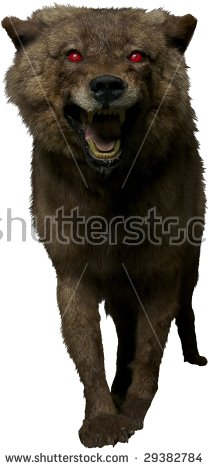 Snarling Wolf Stock Images, Royalty.