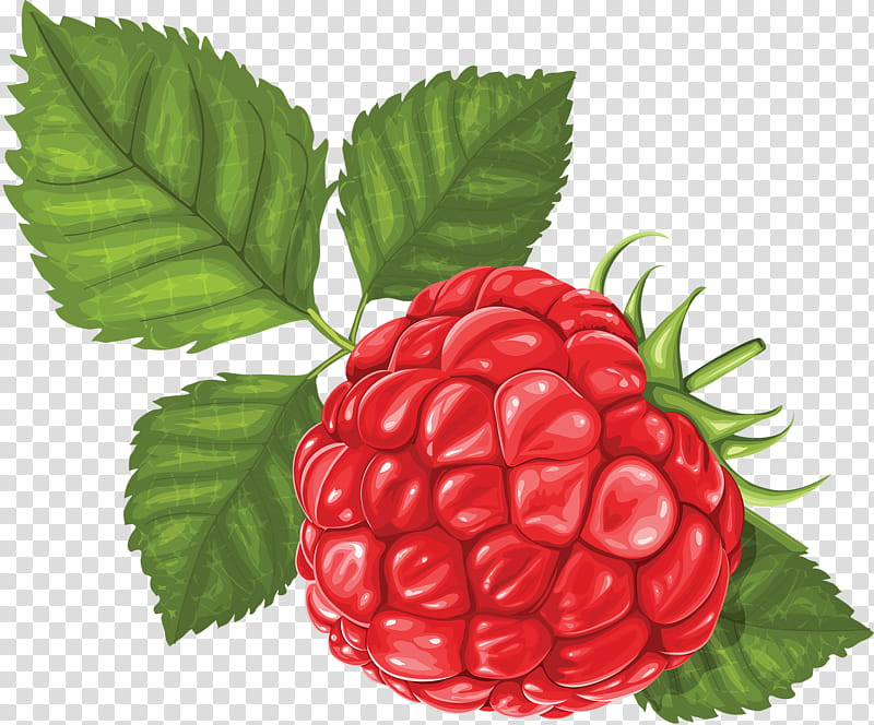 Indian Food, Raspberry, Berries, Drawing, Fruit, Red.