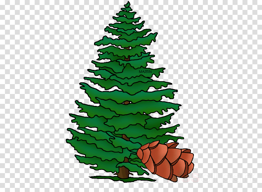 Download hemlock tree clipart Christmas tree Pine Spruce.