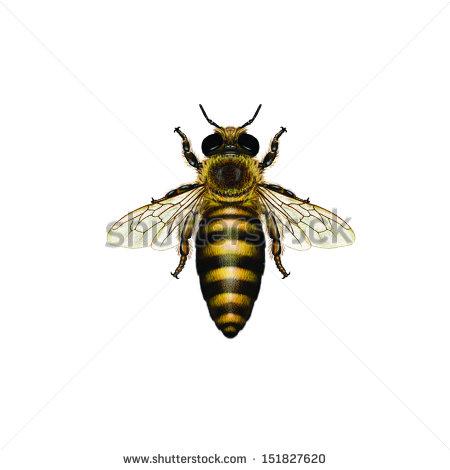 Royalty free logo clipart queen honey bee.