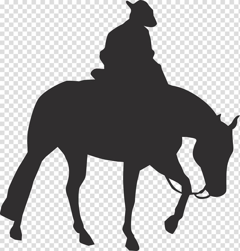 Rocky Mountain Horse Pony graphics Equestrian Western riding.