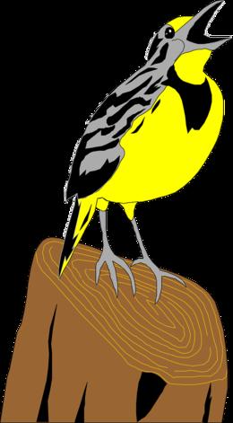 Western Meadowlark clipart.