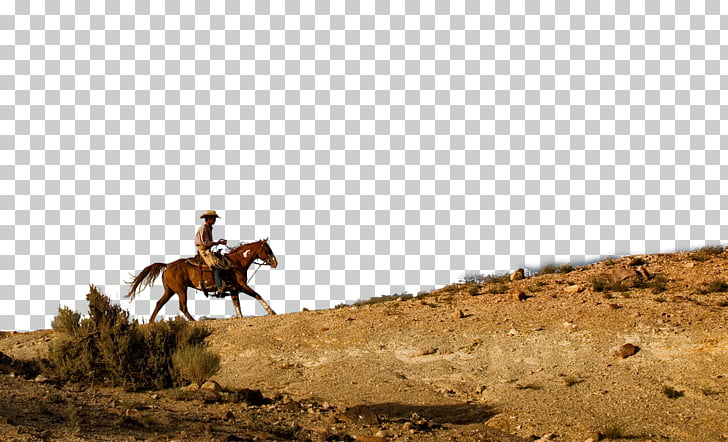 Horse Waggoner Ranch Cowboy Cattle, cowboy PNG clipart.