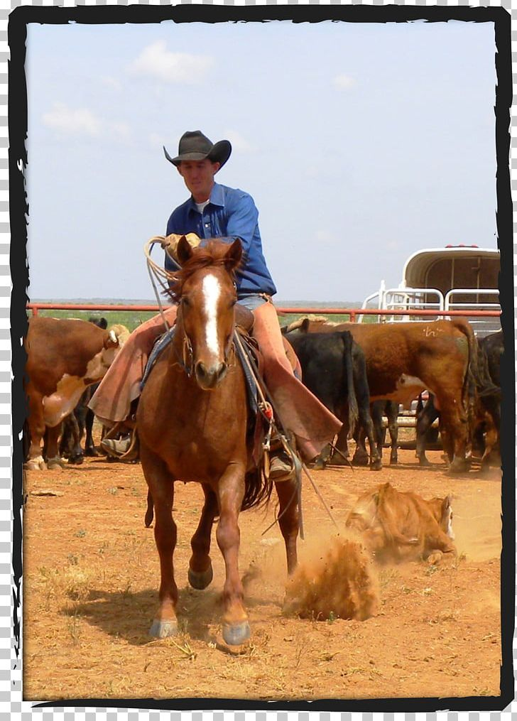 Tongue River Ranch Cattle Waggoner Ranch Cowboy PNG, Clipart.