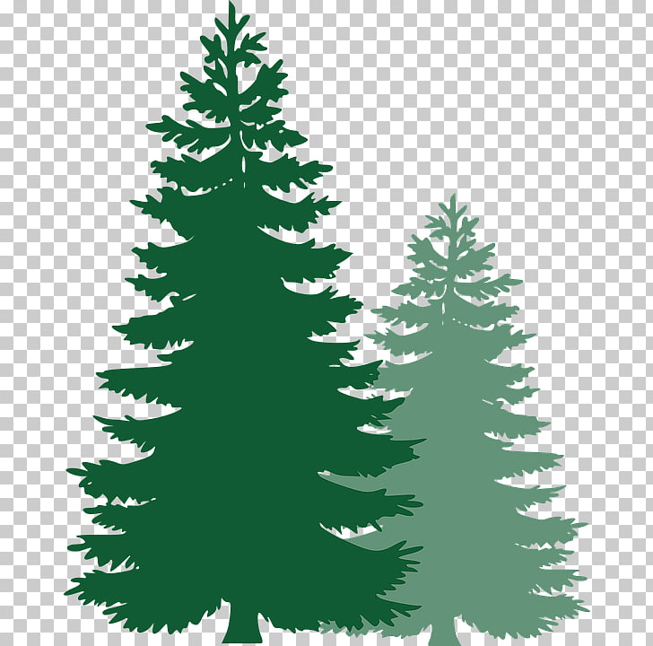 Tree Pine , tree PNG clipart.