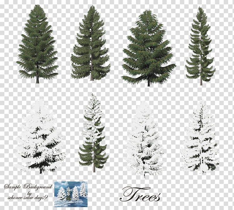 Pine Trees , white and green pine trees illustration.