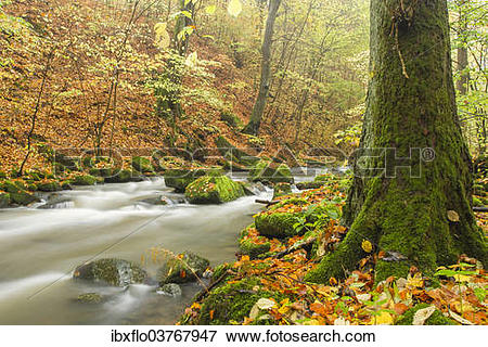 """Picture of """"Holzbach stream in the Holzbachschlucht gorge."""