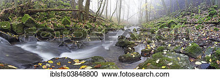"""Stock Photography of """"Stream with moss."""