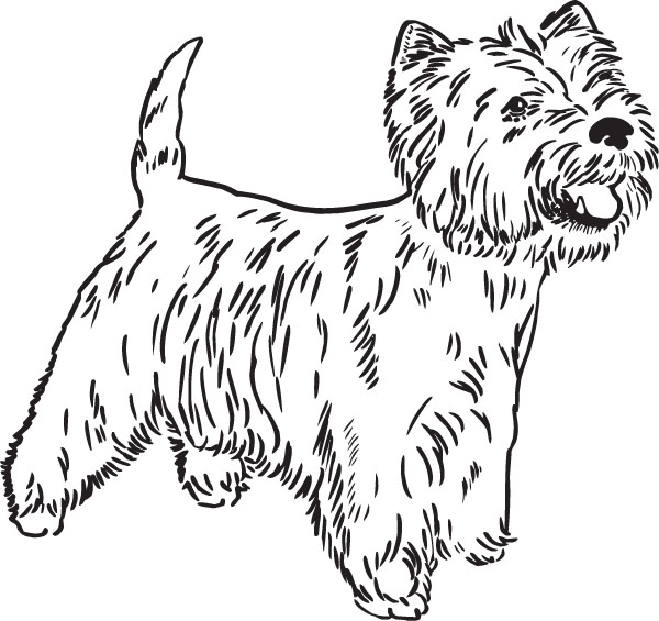 West Highland White Terrier Westie Art For Engraved Products.