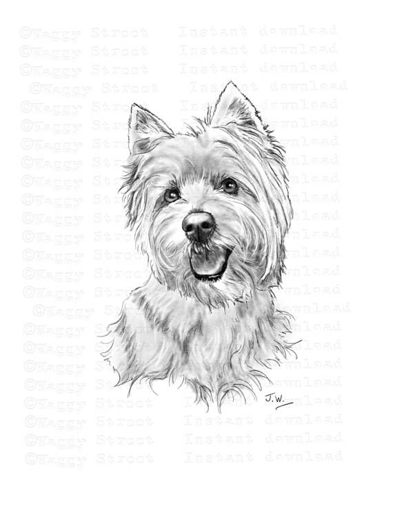 Westie clipart instant download. Digital pencil drawing art.