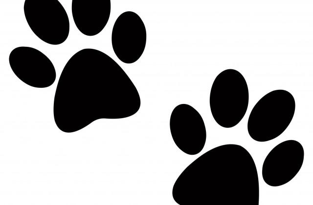 Pics Photos Cat Paw Prints Clip Art.