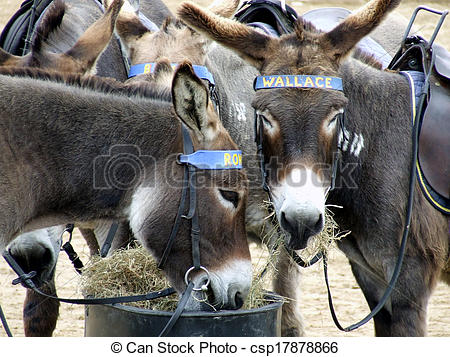 Stock Illustration of Donkeys at Weston Super Mare.