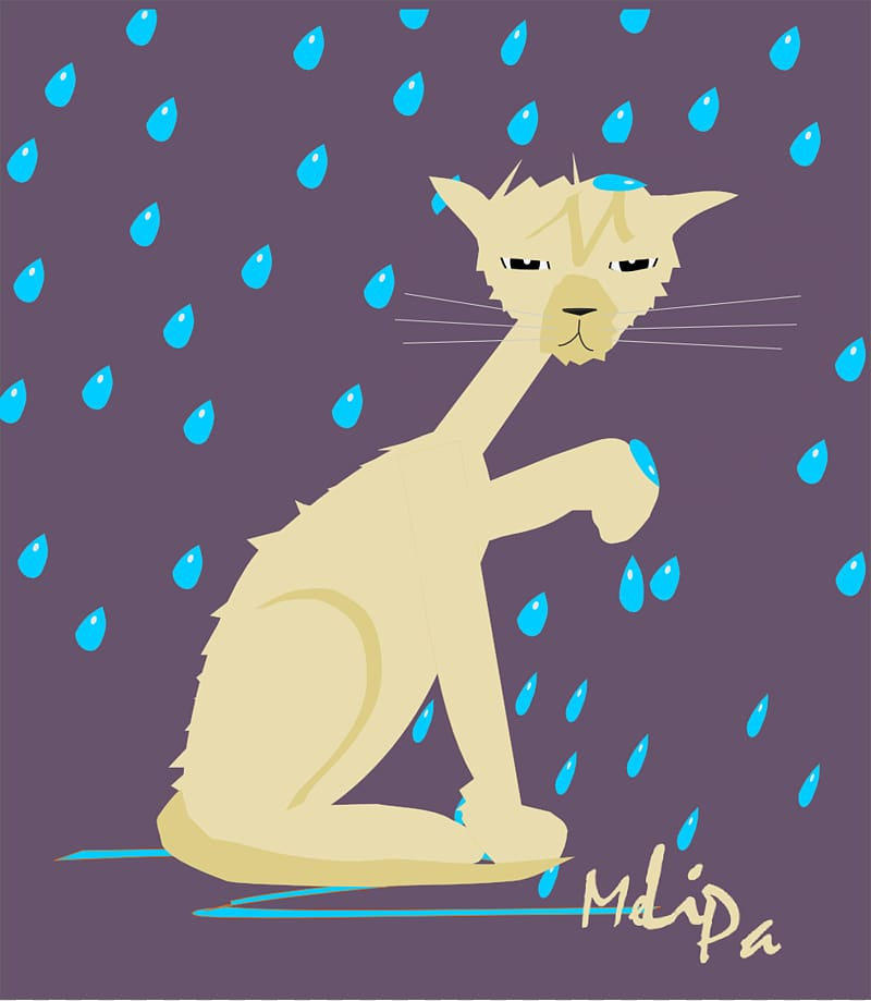 Cat food Kitten , Wet Face transparent background PNG.
