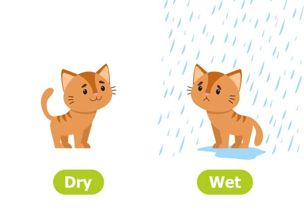 Best Wet And Dry Illustrations, Royalty.