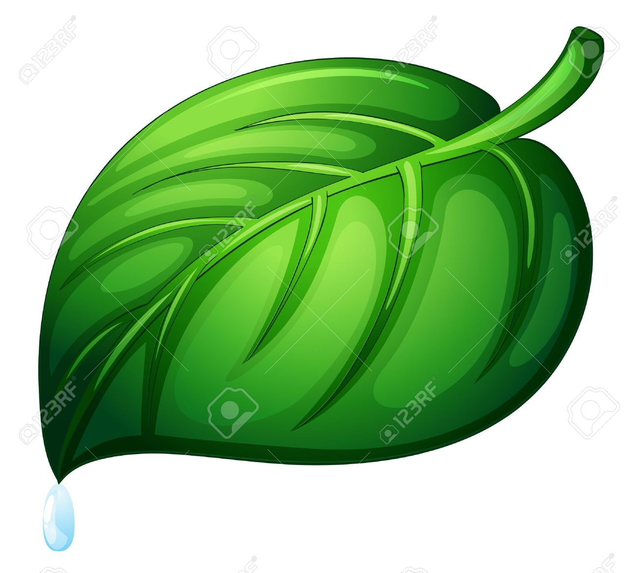 Illustration Of A Leaf On White Royalty Free Cliparts, Vectors.