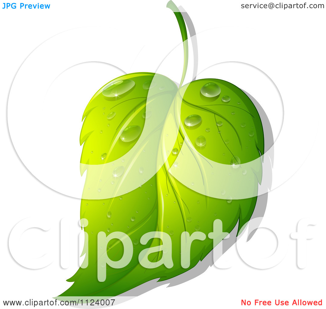 Clipart Of A Green Leaf Wet With Dew 4.