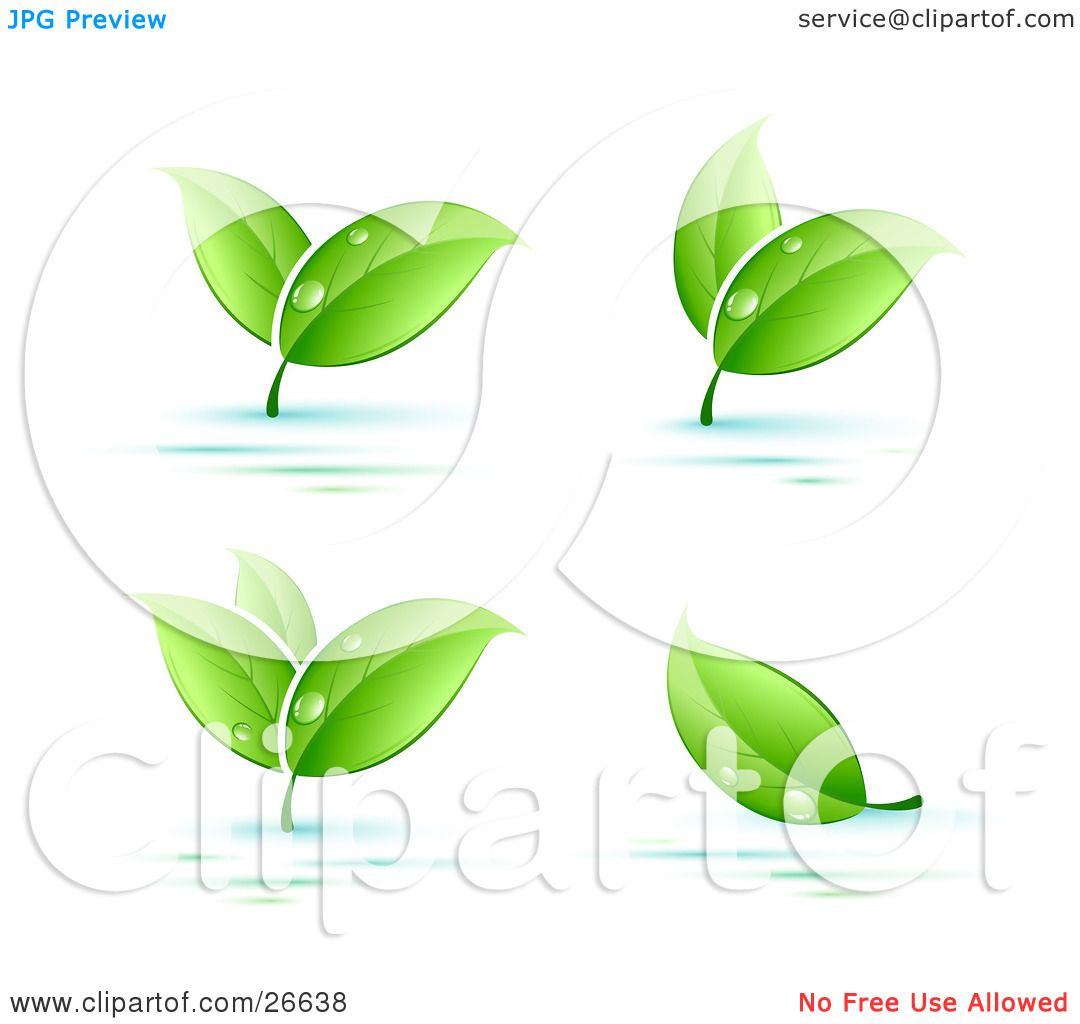 Clipart Illustration of Four Sprigs Of Leaves Wet With Dew Drops.