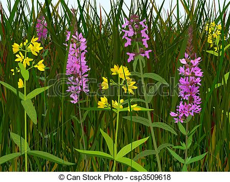 Stock Illustration of Wet meadow flowers.