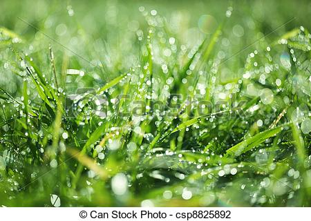 Stock Photo of Wet grass csp8825892.