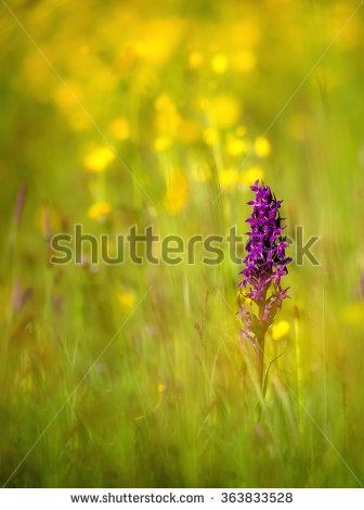 Portfolio von Christopher Beyer auf Shutterstock.