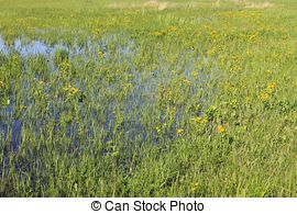Picture of Taylor Creek Marsh Wildflowers.