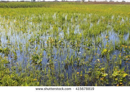 Marsh Stock Images, Royalty.