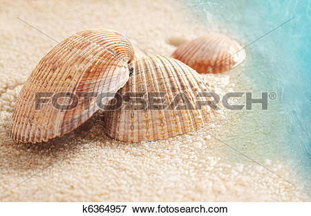 Picture of Seashells in the wet sand k6364957.