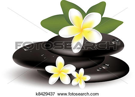 Clip Art of vector frangipani flowers and wet stones k8429437.