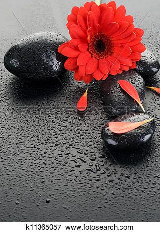 Picture of Zen Spa Wet Stones And Red Flower k11365057.