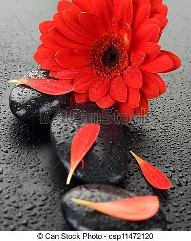 Stock Photo of Zen Spa Wet Stones And Red Flower csp11472120.