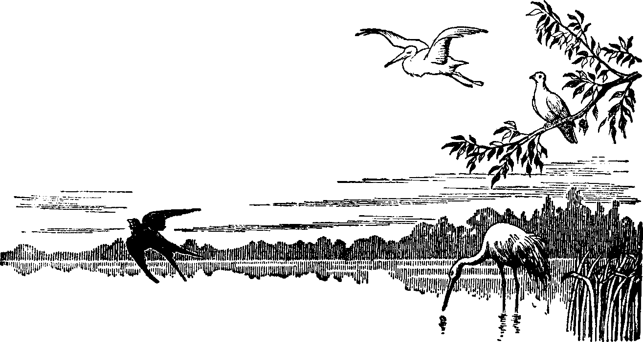 Free Swamp Clipart Black And White, Download Free Clip Art.