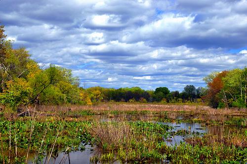 Wetland clipart.