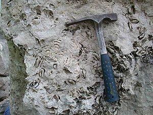 Solnhofen limestone.