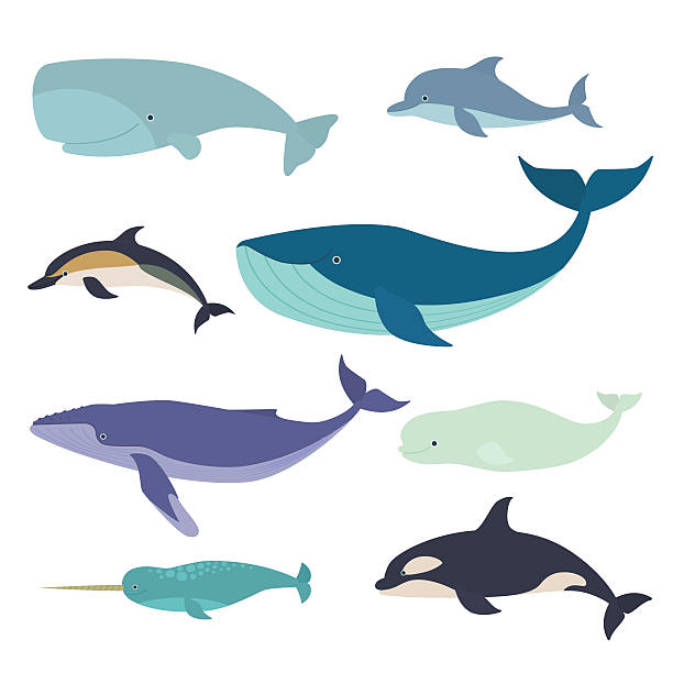 Best Humpback Whale Illustrations, Royalty.