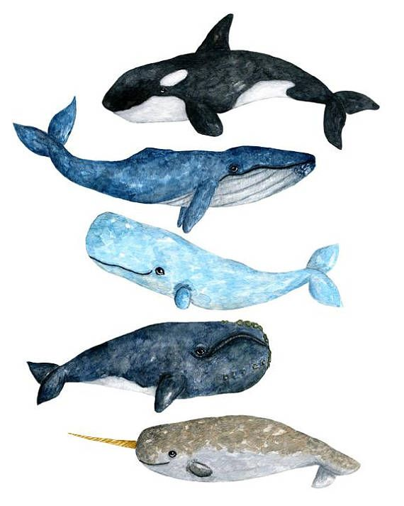 Watercolor whale, watercolor whale clipart, whale clipart.