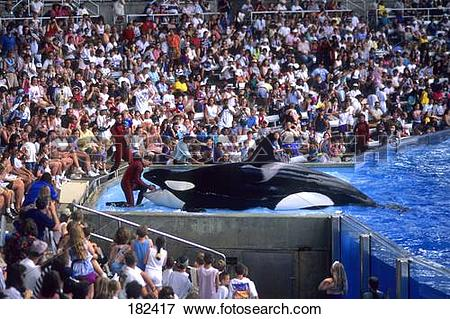 Picture of Spectators watching Killer whale (Orcinus orca.
