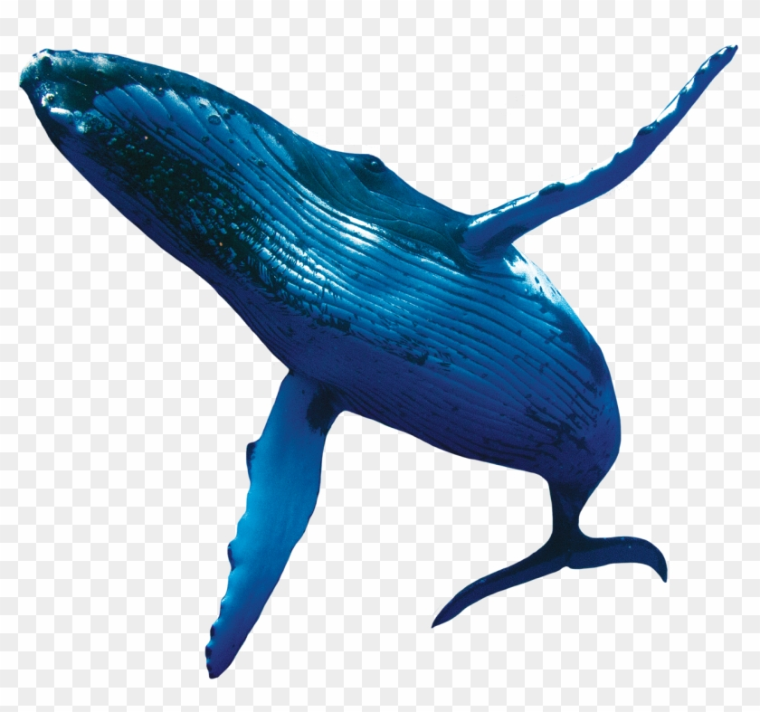Download Whale Fish Png Transparent Images Transparent.