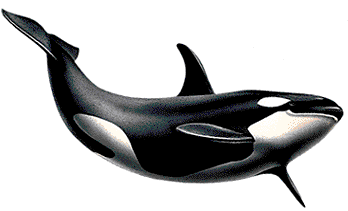 Whale PNG images free download.