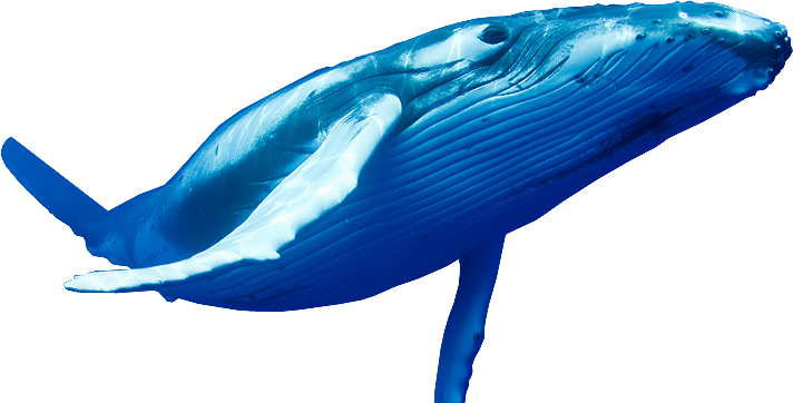 Blue Whale PNG Pic.