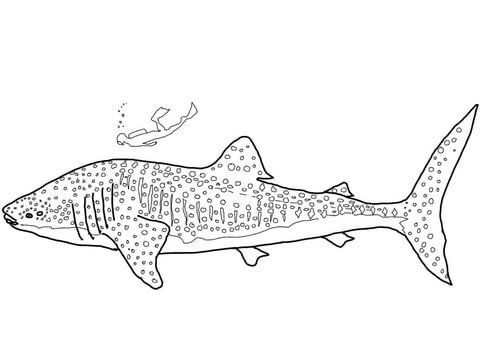 Whale Shark Clipart Black And White.