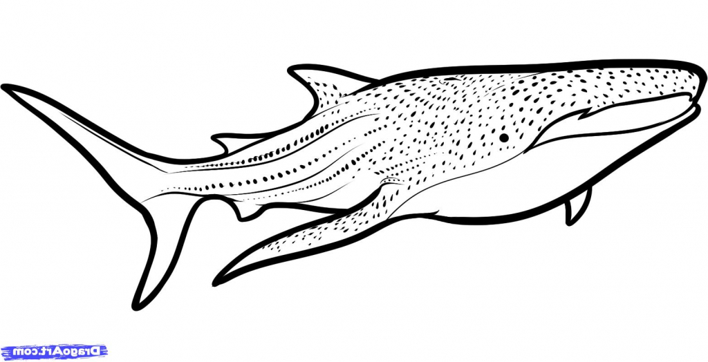 Whale And Shark Coloring Pages.