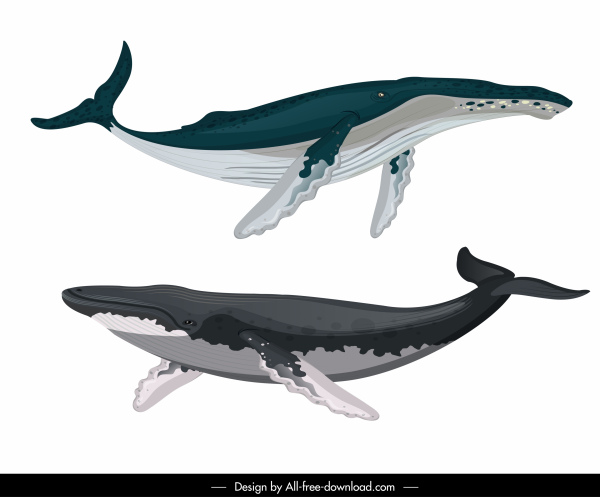Whale species icons swimming sketch Free vector in Adobe.