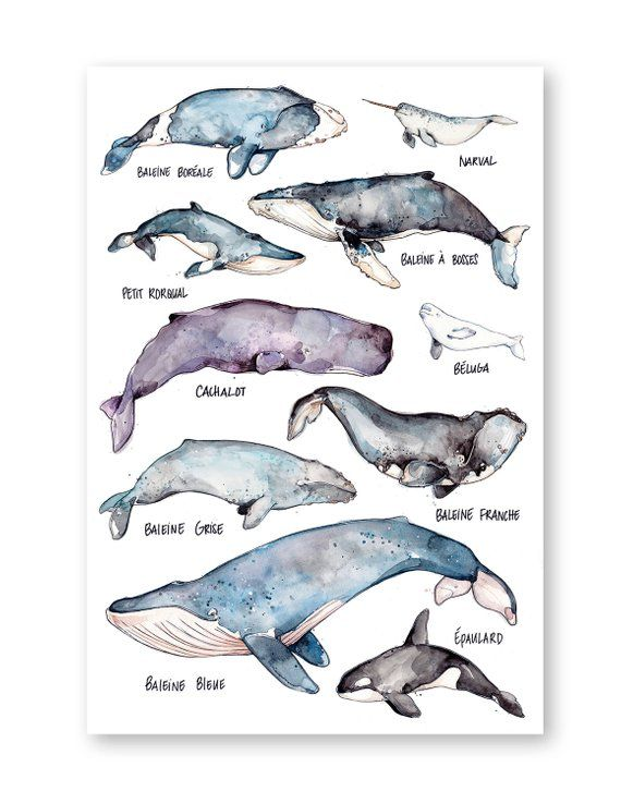 Whales Large Print.