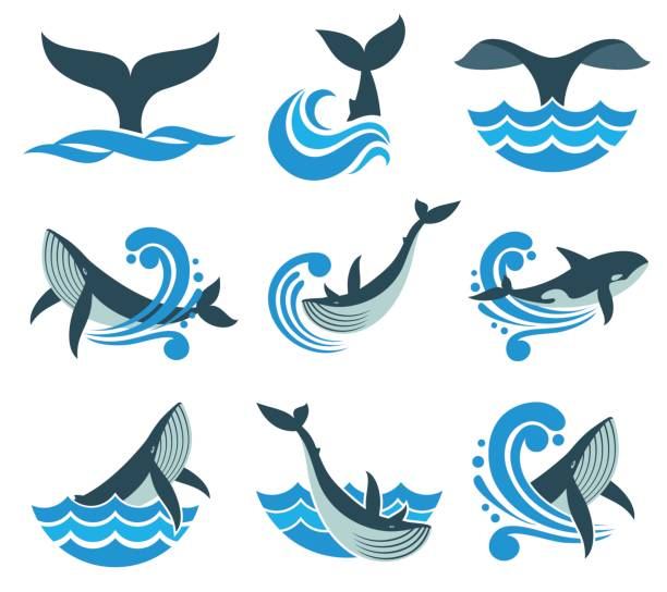 Best Whale Tail Illustrations, Royalty.